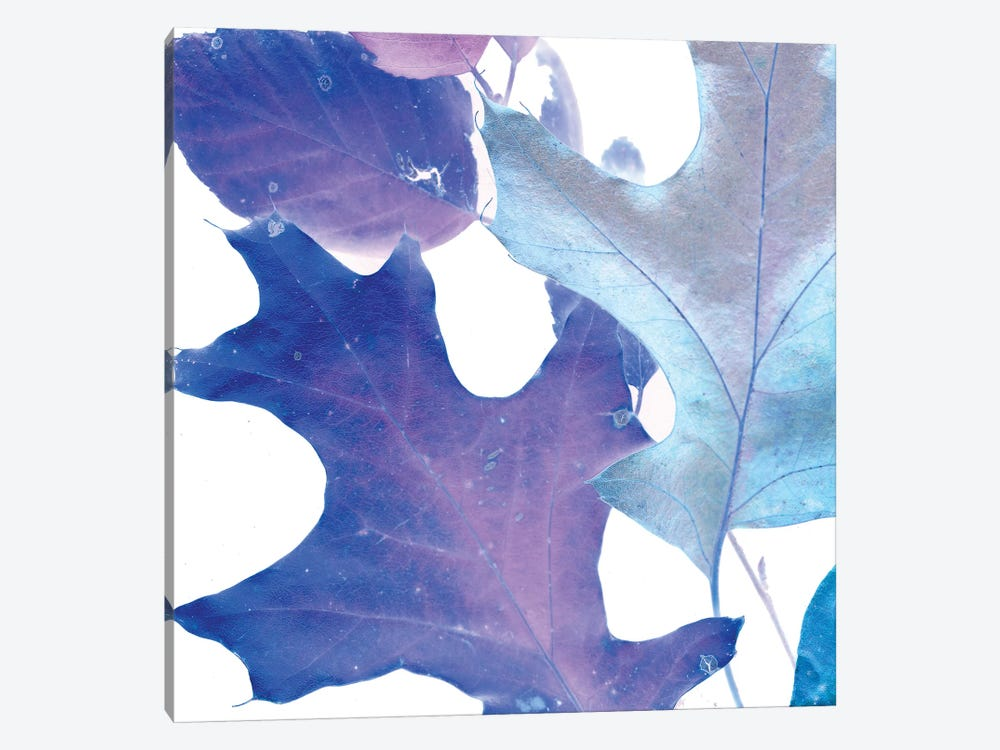 X-ray Leaves II by Vision Studio 1-piece Canvas Art Print