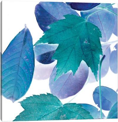 X-ray Leaves III Canvas Print #VSN93