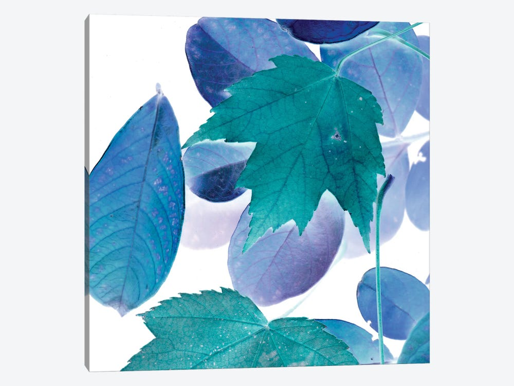 X-ray Leaves III by Vision Studio 1-piece Canvas Art