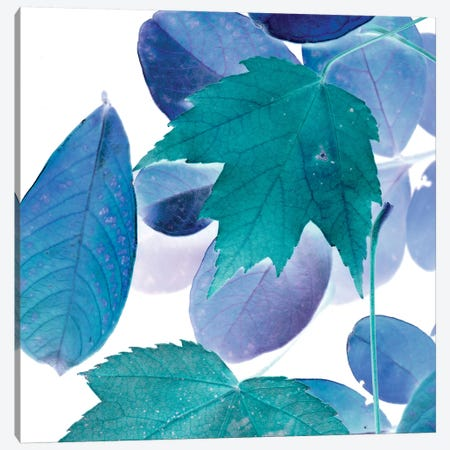 X-ray Leaves III Canvas Print #VSN93} by Vision Studio Canvas Art Print