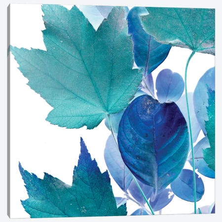 X-ray Leaves IV Canvas Print #VSN94} by Vision Studio Canvas Art