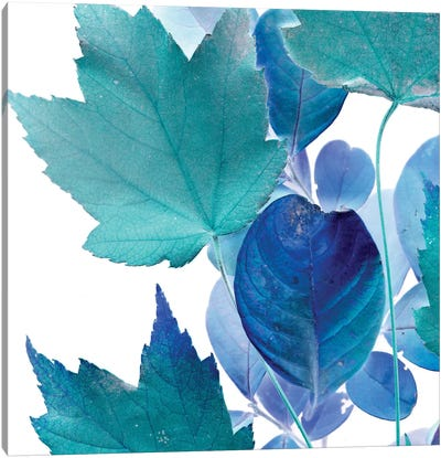 X-ray Leaves IV Canvas Print #VSN94
