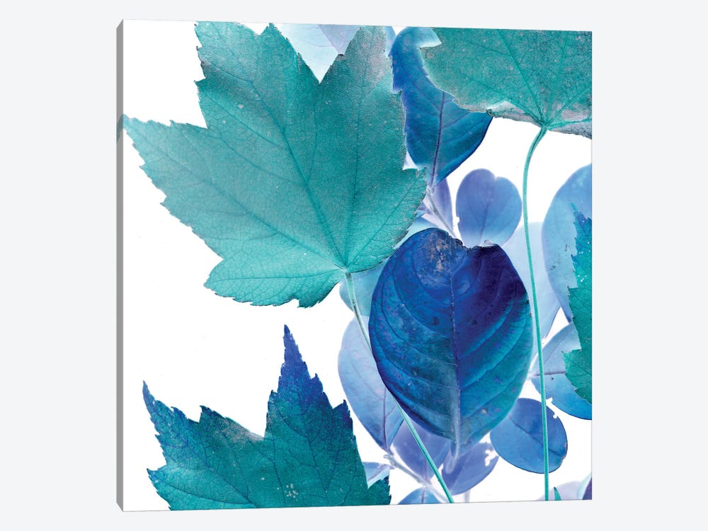 X-ray Leaves IV by Vision Studio 1-piece Art Print
