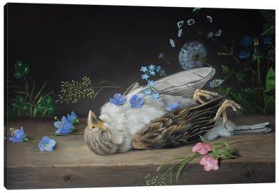 Dead Sparrow Canvas Art Print