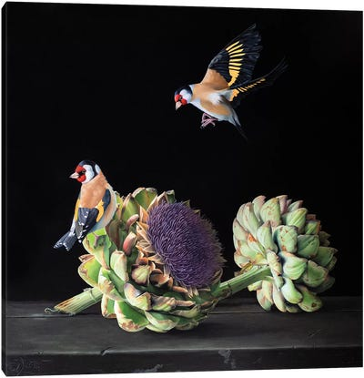 Goldfinch Delight I Canvas Art Print
