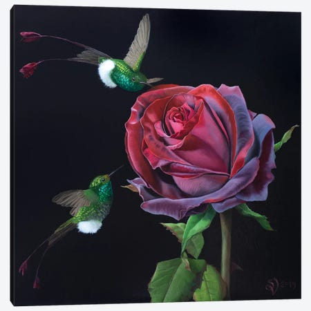 Velvet Rose And Hummingbirds Canvas Print #VSS29} by Suzan Visser Canvas Art Print