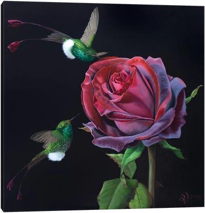 Velvet Rose And Hummingbirds Canvas Art Print