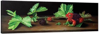 Blackberry Frog Canvas Art Print