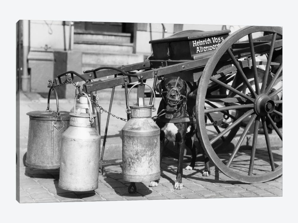 1930s Muzzled Dog Used To Pull Milk Cart Sitting Under The Cart Hamburg Germany by Vintage Images 1-piece Canvas Print