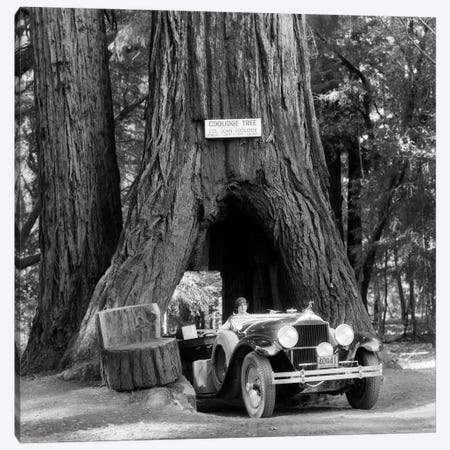 1930s Woman Driving Convertible Car Through Opening In Giant Sequoia Tree Trunk Coolidge Tree Mendocino California Canvas Print #VTG138} by Vintage Images Canvas Art