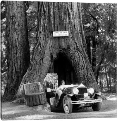 1930s Woman Driving Convertible Car Through Opening In Giant Sequoia Tree Trunk Coolidge Tree Mendocino California Canvas Art Print