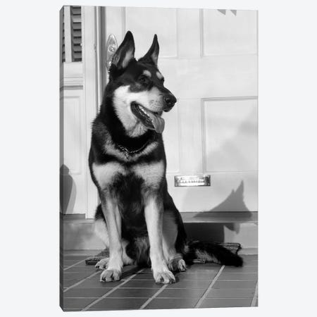 1950s German Shepherd Dog Sitting Outside Front Door Of Home Guard Security Protection Canvas Print #VTG292} by Vintage Images Art Print