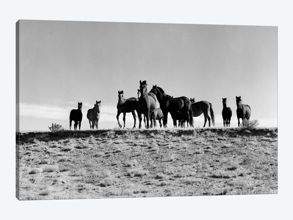 1950s Large Group Of Wild Horses In Open Field by Vintage Images 1-piece Art Print
