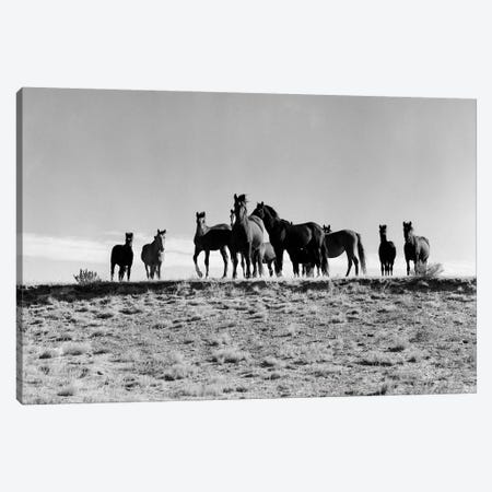 1950s Large Group Of Wild Horses In Open Field Canvas Print #VTG299} by Vintage Images Art Print