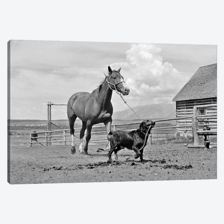 1950s-1960s Black Dog Leading Horse By Holding Rope Halter In His Mouth 3-Piece Canvas #VTG370} by Vintage Images Canvas Artwork