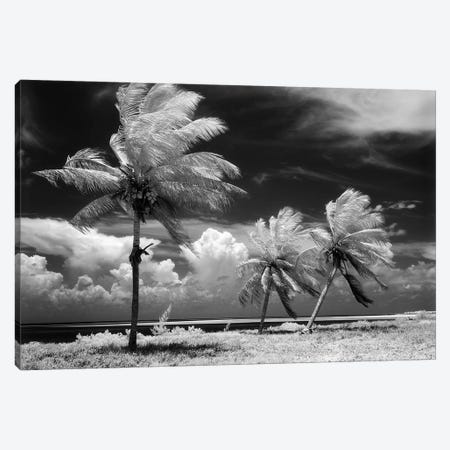 1960s Infrared Scenic Photograph Of Tropical Palm Trees Blowing In Storm Florida Keys USA Canvas Print #VTG429} by Vintage Images Canvas Art