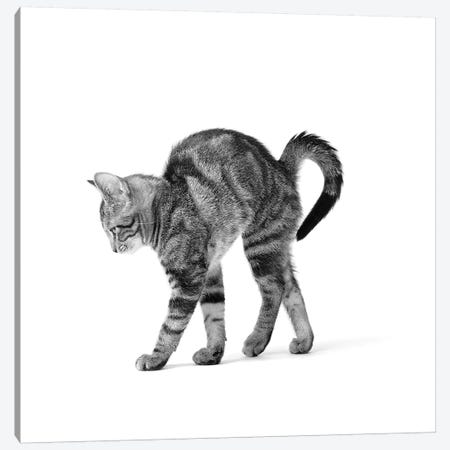 1960s Side View Of Kitten Stretching Out With Arched Back 3-Piece Canvas #VTG457} by Vintage Images Canvas Wall Art