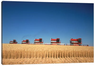 1970s Five Massey Ferguson Combines Harvesting Wheat Nebraska USA Canvas Art Print