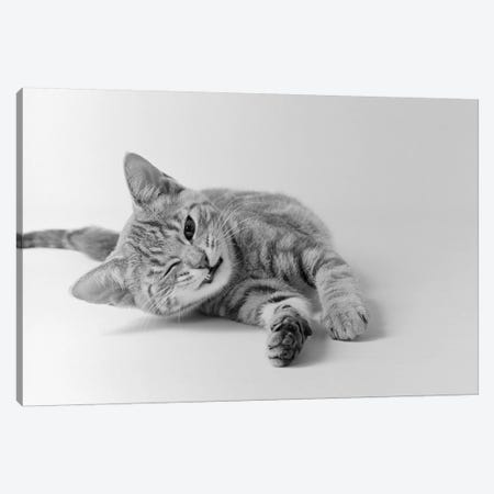 1970s Head On View Of Young Striped Cat Stretching Out On Floor One Eye Closed Indoor Canvas Print #VTG483} by Vintage Images Canvas Art