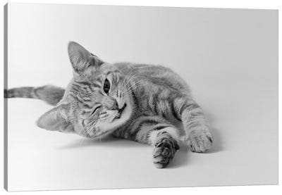 1970s Head On View Of Young Striped Cat Stretching Out On Floor One Eye Closed Indoor Canvas Art Print