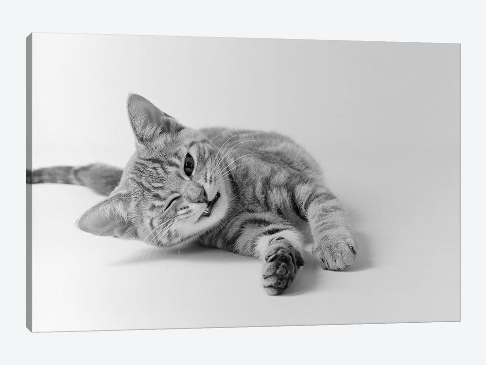 1970s Head On View Of Young Striped Cat Stretching Out On Floor One Eye Closed Indoor by Vintage Images 1-piece Canvas Wall Art