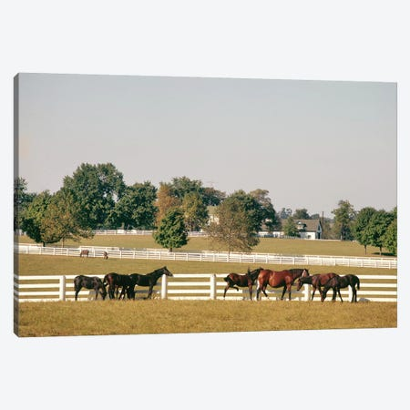 1990s Small Group Of Horses Beside White Pasture Fence Late In Summer Canvas Print #VTG508} by Vintage Images Canvas Print