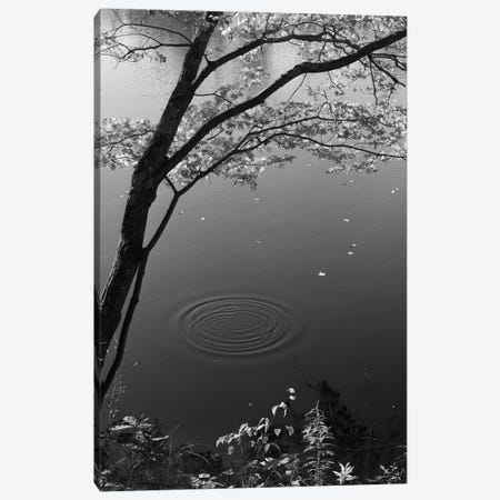 Autumn Tree By Bank Of Pond Concentric Circles In The Water Ripple Effect Nature Leaves 3-Piece Canvas #VTG514} by Vintage Images Canvas Print