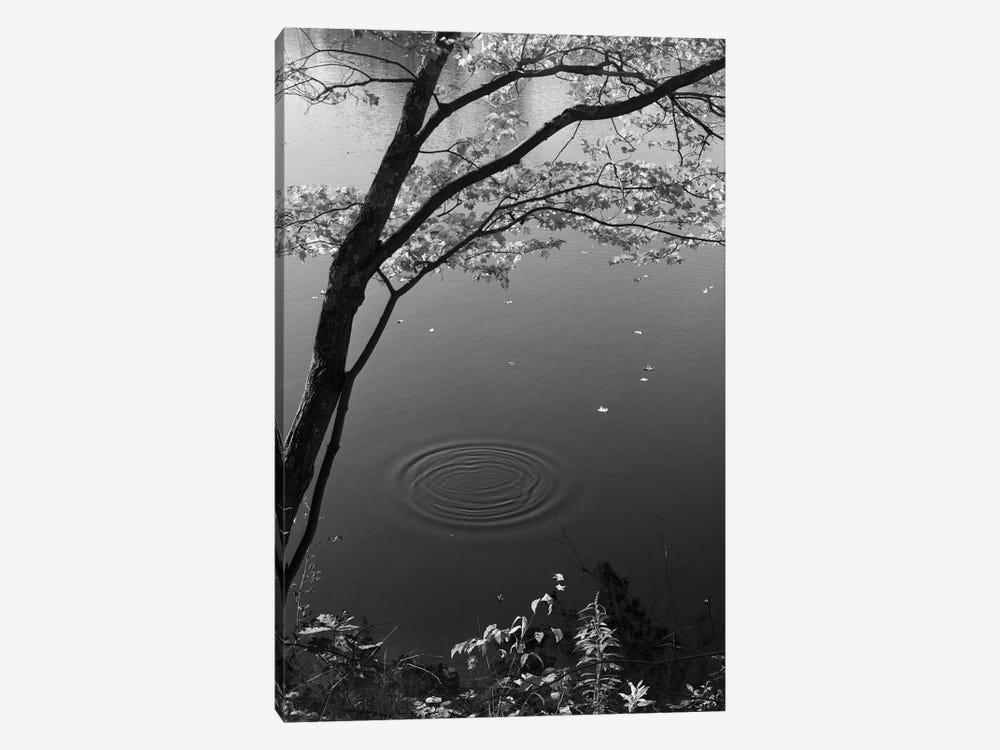 Autumn Tree By Bank Of Pond Concentric Circles In The Water Ripple Effect Nature Leaves by Vintage Images 1-piece Art Print