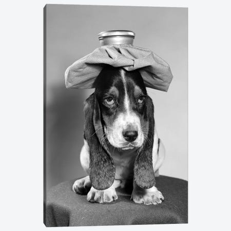 Bassett Hound Dog With Ice Pack On Head Canvas Print #VTG516} by Vintage Images Canvas Print