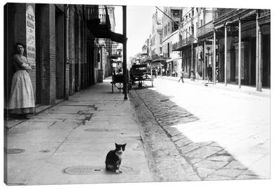 Early 1900s Cat Sitting On Street Older Section Of New Orleans Louisiana USA Canvas Art Print