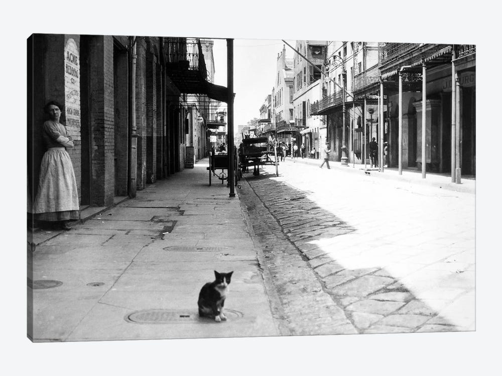 Early 1900s Cat Sitting On Street Older Section Of New Orleans Louisiana USA 1-piece Canvas Artwork