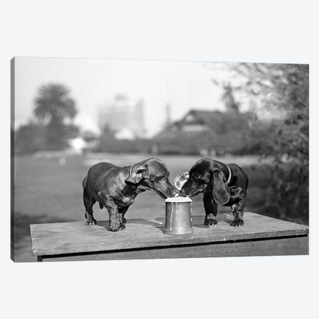 1890s Two Dachshund Puppies Lapping Beer From Stein 3-Piece Canvas #VTG537} by Vintage Images Canvas Art Print