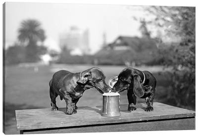 1890s Two Dachshund Puppies Lapping Beer From Stein Canvas Art Print