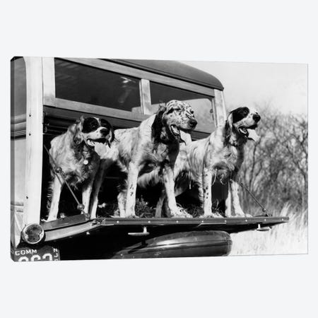 1930s English Setter Hunting Dogs On Tailgate Of Wood Body Station Wagon Automobile 3-Piece Canvas #VTG541} by Vintage Images Canvas Print