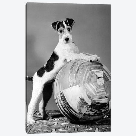 1940s Terrier In Playful Pose Front Paws Up On Large Ball Ready To Play Canvas Print #VTG552} by Vintage Images Canvas Wall Art