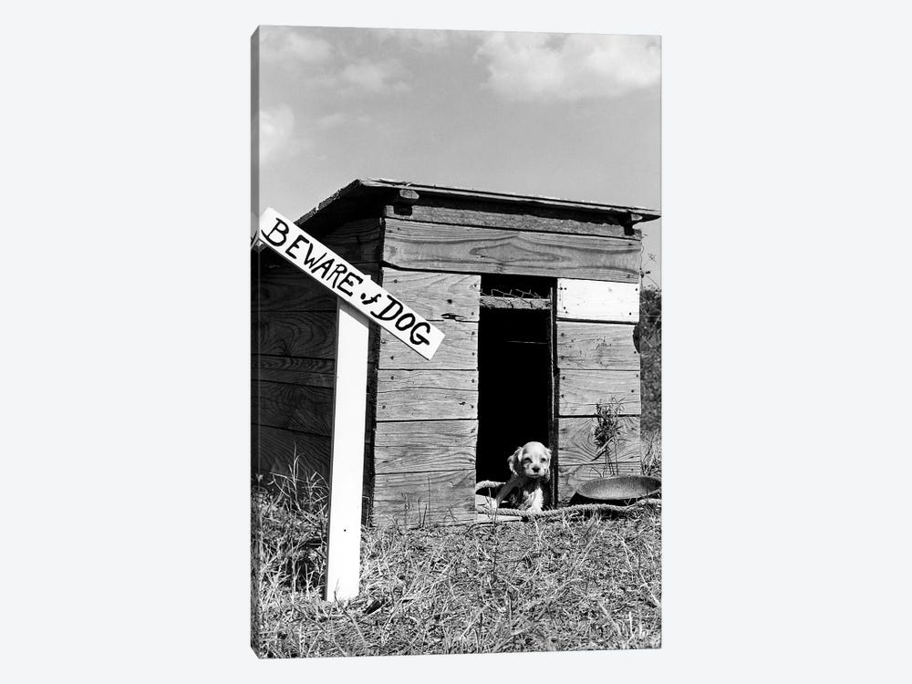 1950s Cocker Spaniel Puppy In Doghouse With Beware Of Dog Sign by Vintage Images 1-piece Canvas Wall Art