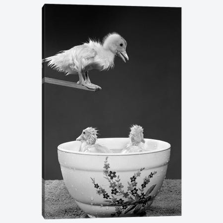1950s Duckling On Diving Board Looking Down At Two Other Ducklings In Deep Bowl Filled With Water Canvas Print #VTG561} by Vintage Images Art Print