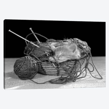 1950s Sleeping Kitten Sleeping In Knitting Yarn Basket Canvas Print #VTG571} by Vintage Images Canvas Artwork