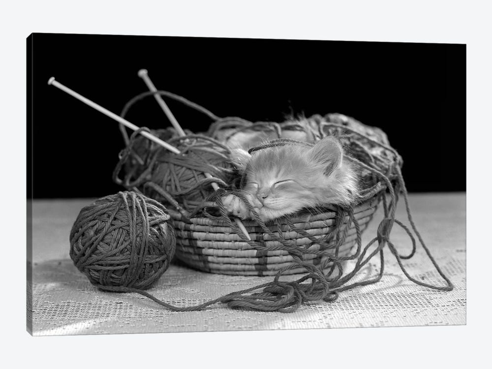 1950s Sleeping Kitten Sleeping In Knitting Yarn Basket by Vintage Images 1-piece Canvas Artwork