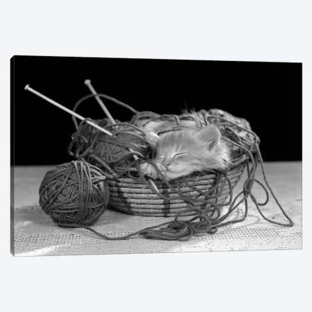 1950s Sleeping Kitten Sleeping In Knitting Yarn Basket Canvas Print #VTG571} by Vintage Images Canvas Artwork