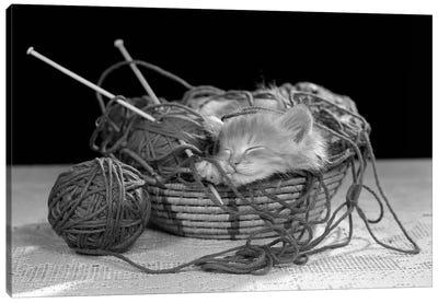 1950s Sleeping Kitten Sleeping In Knitting Yarn Basket Canvas Art Print