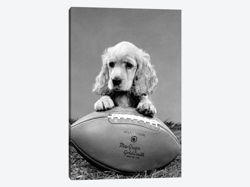 1960s Cocker Spaniel Puppy With Front Paw Resting On American Football by Vintage Images 1-piece Canvas Art