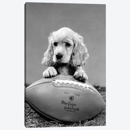 1960s Cocker Spaniel Puppy With Front Paw Resting On American Football 3-Piece Canvas #VTG579} by Vintage Images Canvas Wall Art