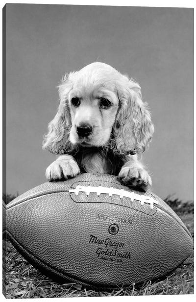 1960s Cocker Spaniel Puppy With Front Paw Resting On American Football Canvas Art Print