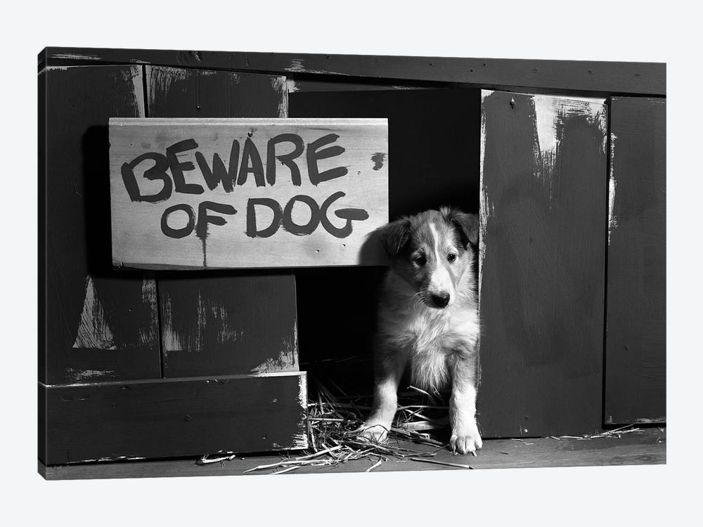 1960s Collie Dog Puppy Sitting In Door Of Doghouse Beware Of Dog Sign by Vintage Images 1-piece Canvas Artwork