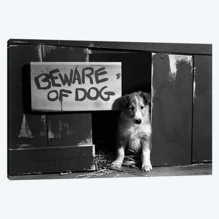 1960s Collie Dog Puppy Sitting In Door Of Doghouse Beware Of Dog Sign 3-Piece Canvas #VTG580} by Vintage Images Art Print