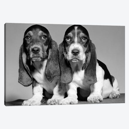 1960s Pair Of Basset Pups Sitting Shoulder-To-Shoulder Looking At Camera Canvas Print #VTG582} by Vintage Images Art Print