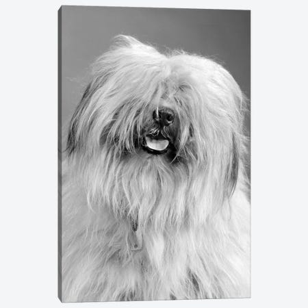 1960s Portrait Of Old English Sheepdog With Hair Covering Eyes & Tongue Barely Hanging Out Looking At Camera Canvas Print #VTG584} by Vintage Images Canvas Artwork