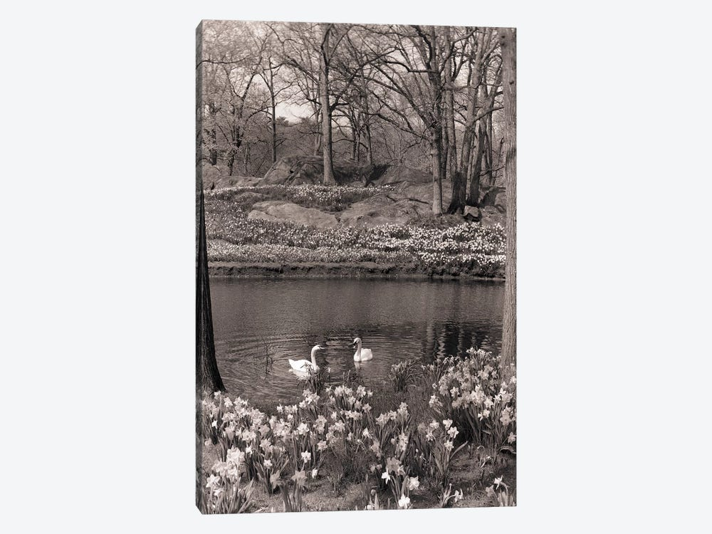 1960s-70s Spring Landscape Pond Lake Daffodils Pair Of Swans by Vintage Images 1-piece Canvas Art Print