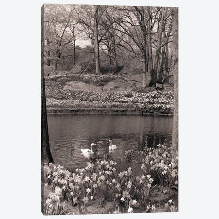 1960s-70s Spring Landscape Pond Lake Daffodils Pair Of Swans Canvas Print #VTG592} by Vintage Images Canvas Art
